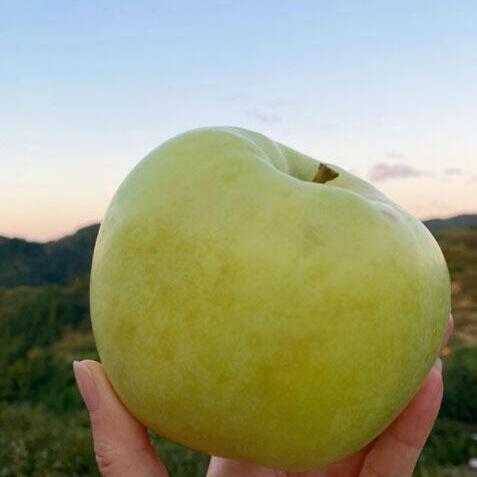 こうこうという品種のりんご