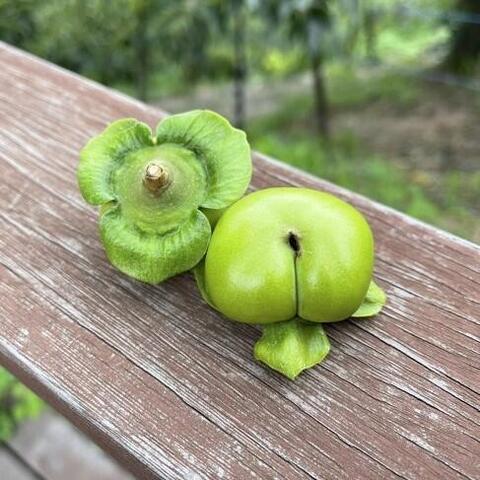 果物のなる風景~柿~