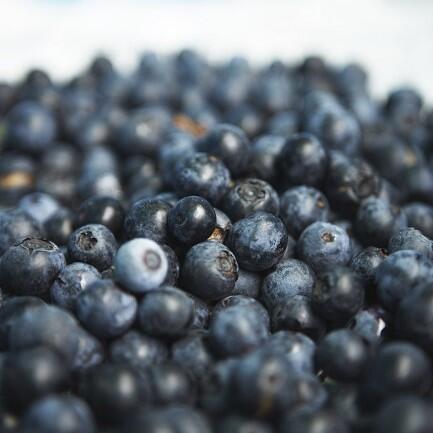果物のなる風景~ブルーベリー~